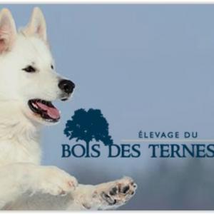 Le Bois des Ternes