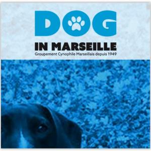 Dog in Marseille (Groupement Cynophile Marseillais)