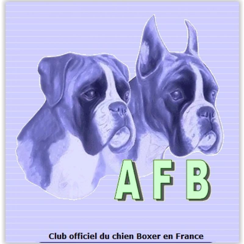 club-chien-boxer-france.jpg