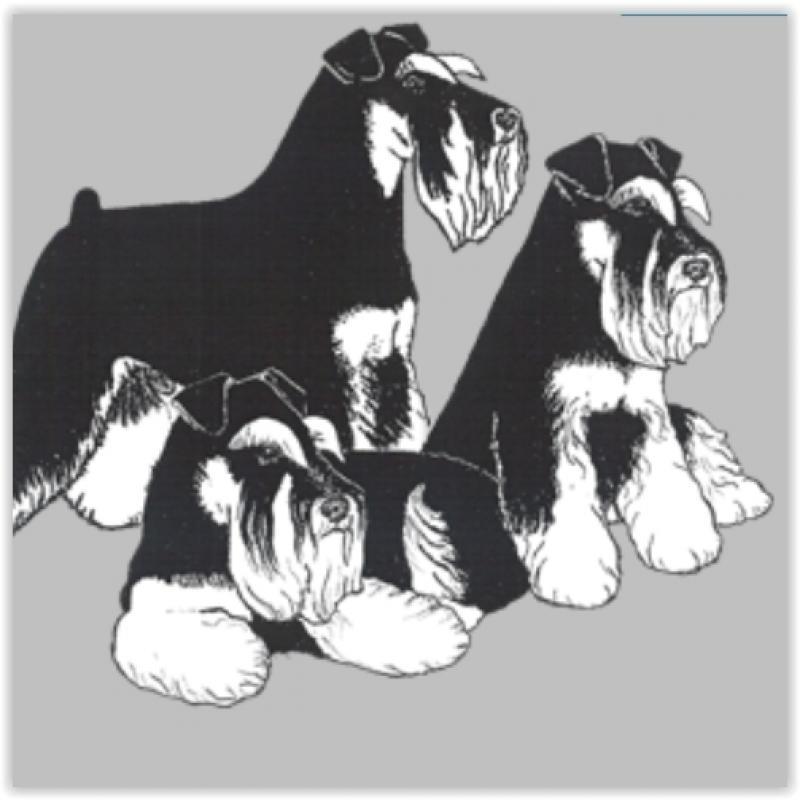 eleveur-chien-schnauzer-nain-kinsman-annuaire-tout-toutou.jpg