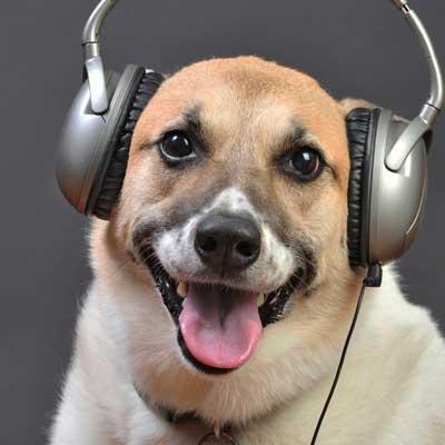 Profil-rencontre-chien04