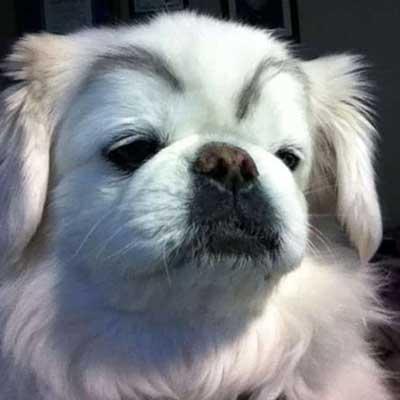 Profil-rencontre-chien08