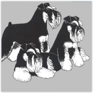 eleveur-chien-schnauzer-nain-kinsman-annuaire-tout-toutou